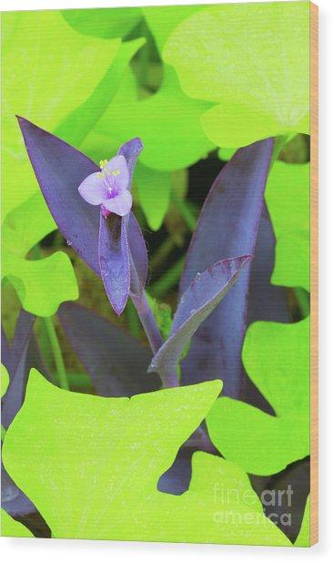 Wandering Through Green Wood Print by Steven Dillon