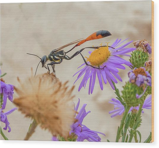 Wasp At White Sands Wood Print