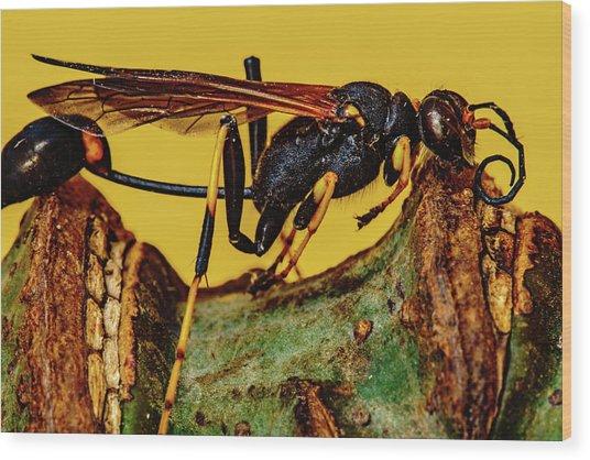Wasp Just Had Enough Wood Print