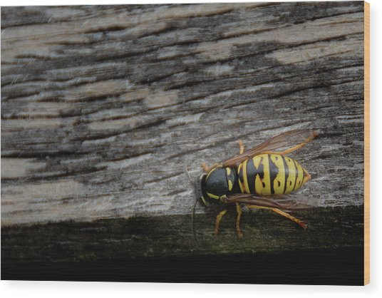 Wasp On Wood Wood Print