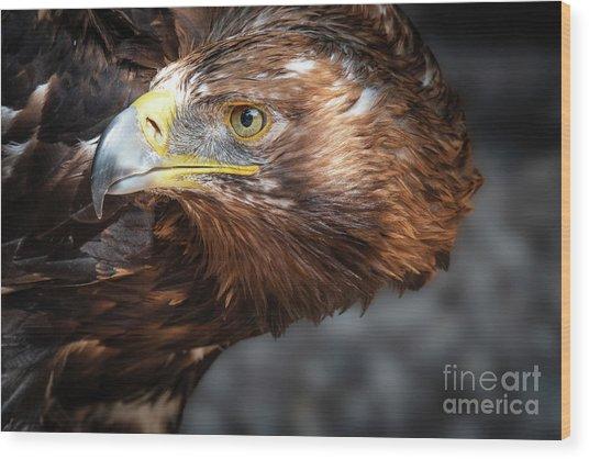 Watching Eagle Wood Print