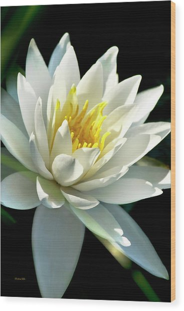 Wood Print featuring the photograph Water Lily by Christina Rollo