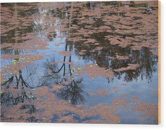 Water Reflection_svrp_1056_18 Wood Print