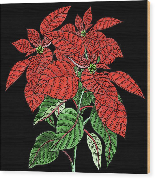 Watercolor Flower Red Poinsettia Plant Wood Print