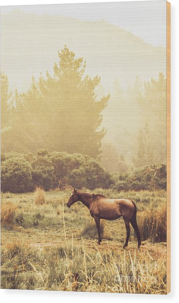 Western Ranch Horse Wood Print