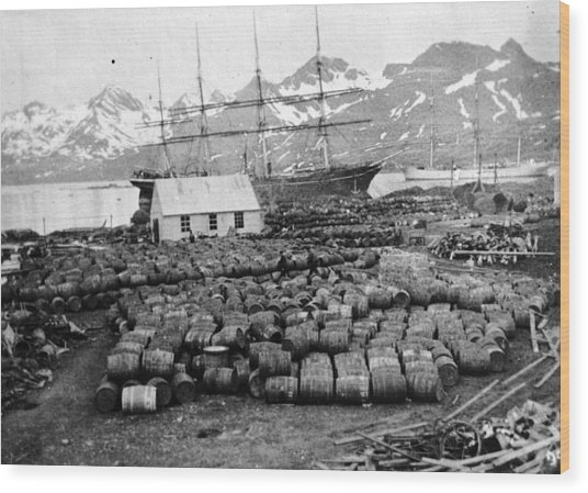Whaling Station Wood Print by General Photographic Agency
