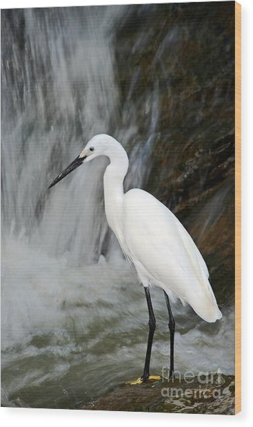 White Bird With Waterfall. Heron In The Wood Print
