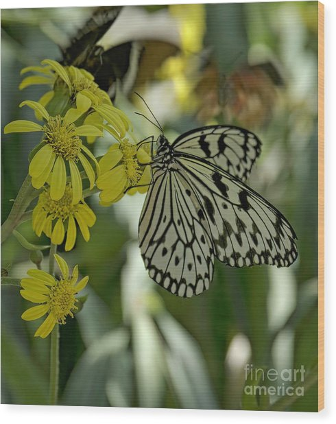 White Butterfly Wood Print by Elijah Knight