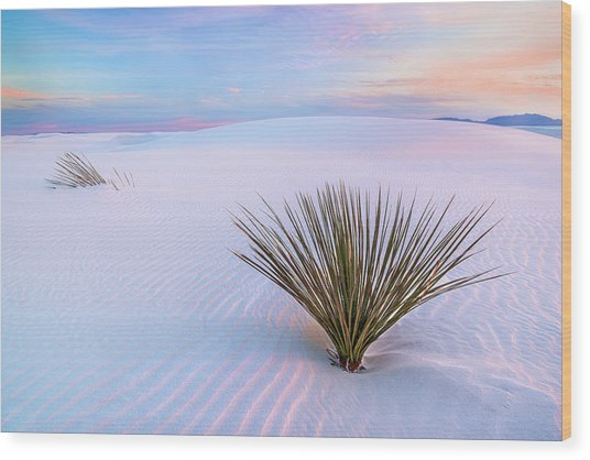 White Dunes, White Sands National Monument Wood Print