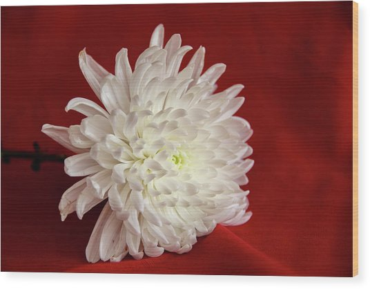 White Flower On Red-1 Wood Print