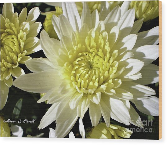 White Flowers W8 Wood Print
