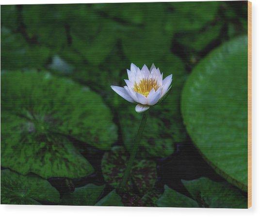 White Lotus Wood Print