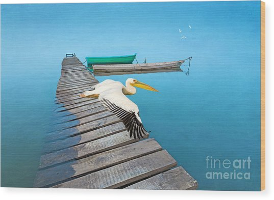 White Pelican And Ocean Blue Wood Print