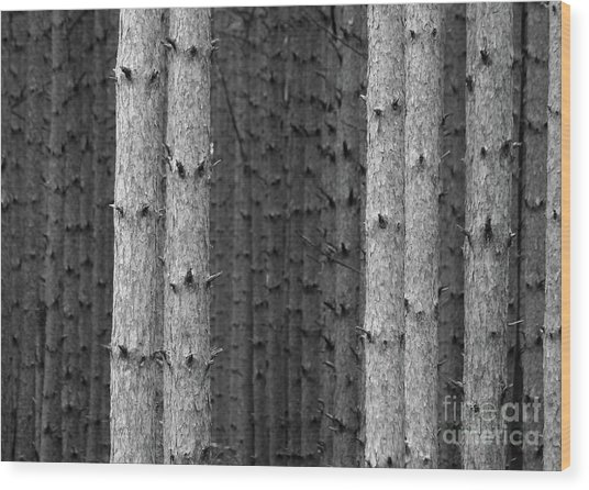 White Pines Black And White Wood Print