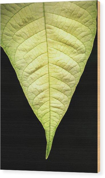 White Poinsettia Leaf Wood Print