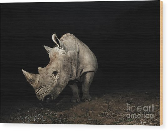 White Rhinoceros Wood Print by Signature Message