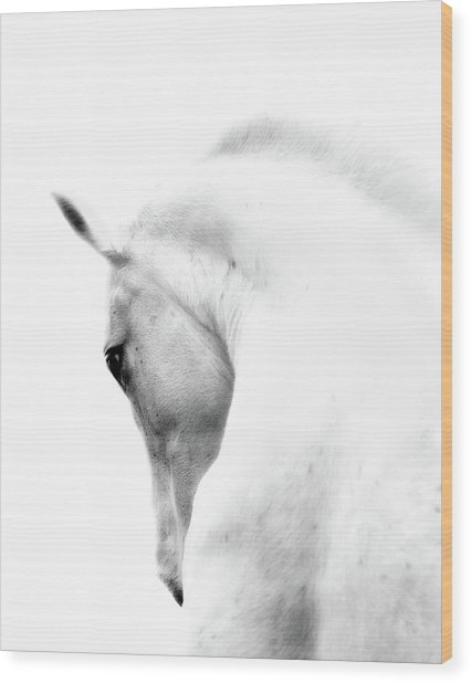 White Stallion Andalusian Horse Neck Wood Print by 66north