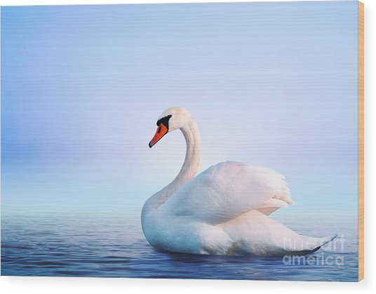 White Swan In The Foggy Lake At The Wood Print