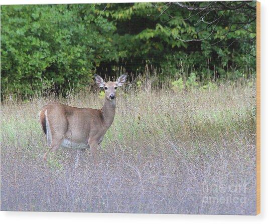 White Tale Deer Wood Print