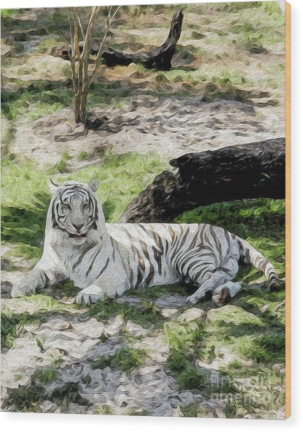 White Tiger At Rest Wood Print
