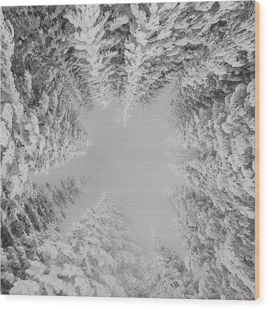 Wood Print featuring the photograph White Winter Wonderland  by Rand