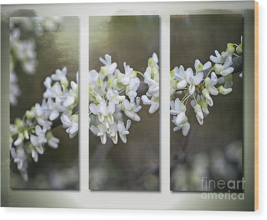 Wood Print featuring the photograph Whitebud by Ann Jacobson