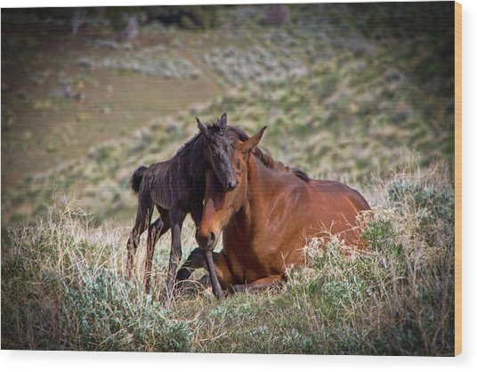 Wild Black New Born Foal And Mare Wood Print