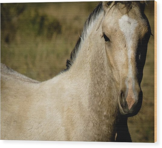 Wild Mustangs Of New Mexico 5 Wood Print
