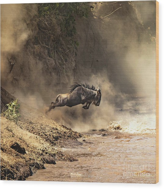 Wildebeest Leaps From The Bank Of The Mara River Wood Print
