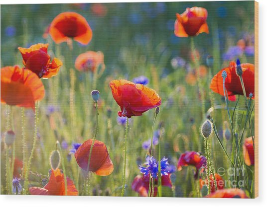 Wildflowers Poppies Wood Print by Mike Mareen