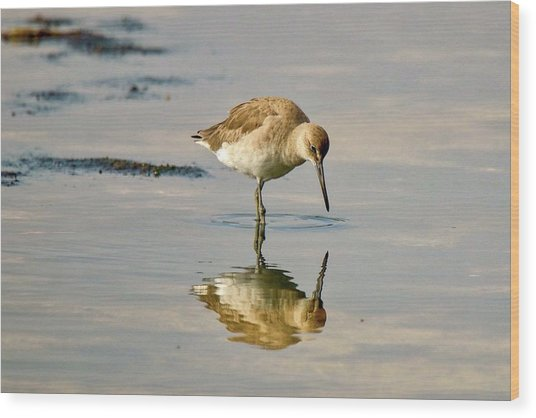 Willet Sees Its Reflection Wood Print