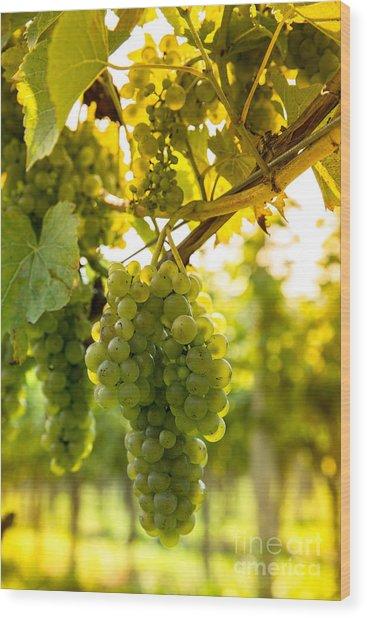 Wine Season Wood Print