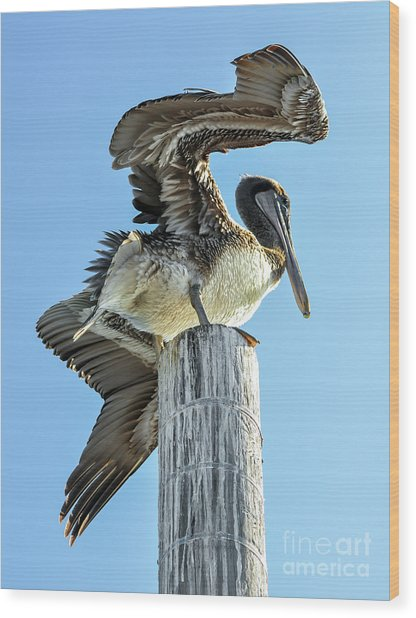Wings Of A Pelican Wood Print