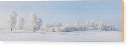 Winter Beautiful Landscape With Trees Wood Print by Alex po