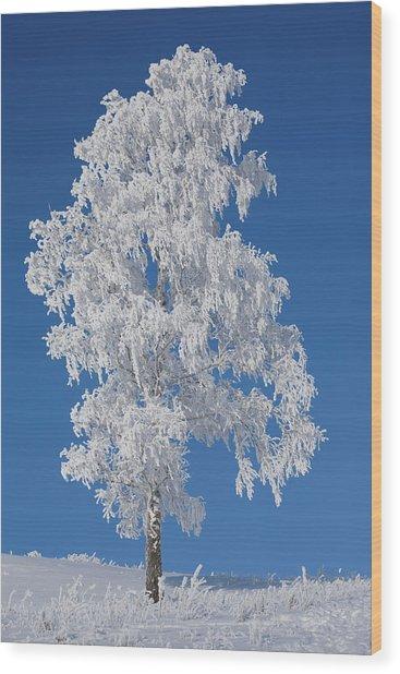 Winter Birch Tree Wood Print by Luvo