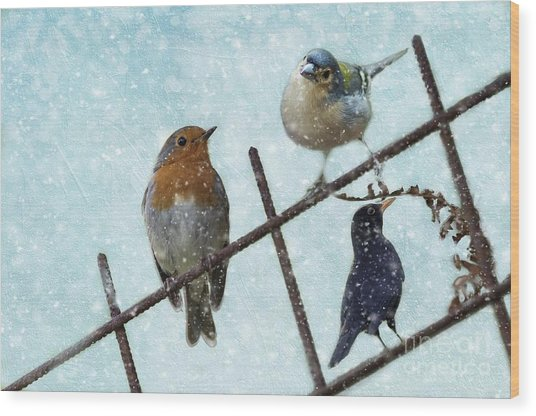 Winter Birds Wood Print