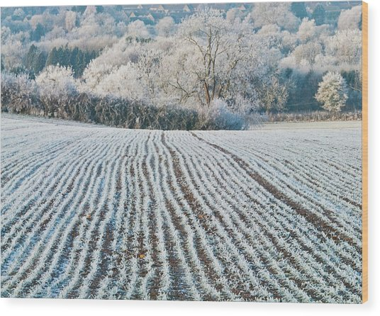 Winter Field, Little Rissington, Gloucestershire Wood Print by David Ross