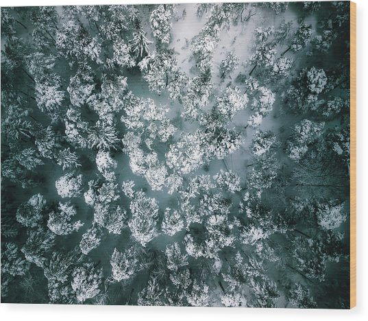 Winter Forest - Aerial Photography Wood Print