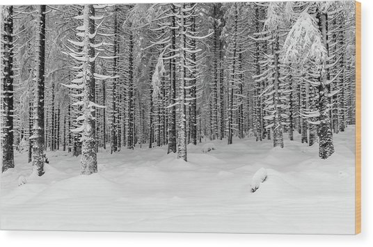 winter forest, Harz Wood Print