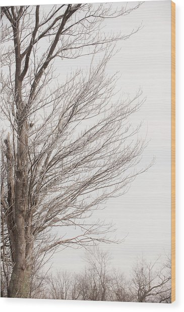 Winter Hoarfrost Wood Print