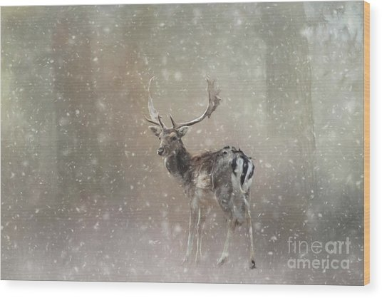 Winter In The Woods Wood Print