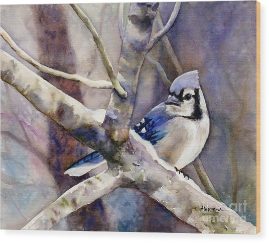 Winter Jay Wood Print