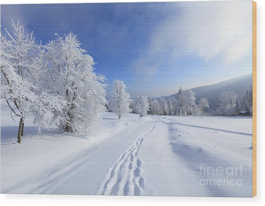 Winter Landscape With Snow Wood Print