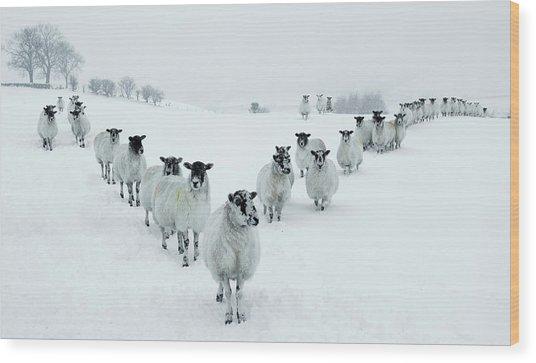 Winter Sheep V Formation Wood Print by Motorider