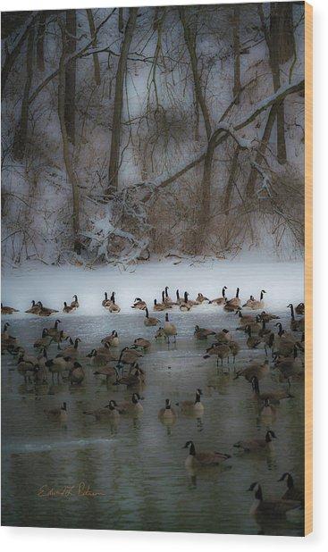 Winter Swim Wood Print