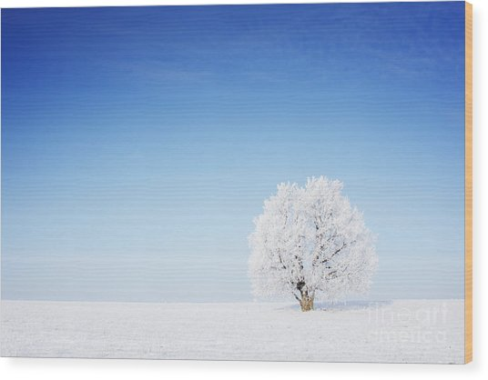 Winter Tree In A Field With Blue Sky Wood Print