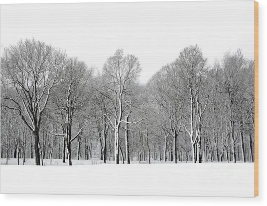 Winter Trees In Snow, Montreal Wood Print