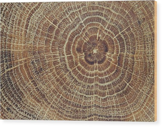 Wood Cross-section Background Wood Print