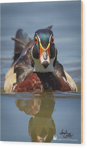 Wood Duck Face First Wood Print