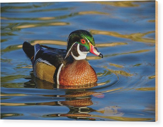 Wood Print featuring the photograph Wood Duck by Nicole Young
